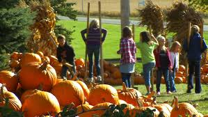 Pumpkin Patch Illinois Chicago by Viewers U0027 Choice For Best Pumpkin Patch Barten Pumpkins Wcco