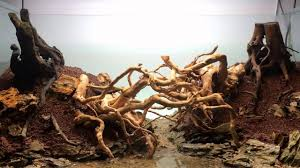 Roots And Grit [2016] - New Aquascape - Hardscaping Part 1 - YouTube Aquascaping Fish Tank Projects Aquadesign George Farmers Live Aquascaping Event At Crowders Ipirations Mzanita Driftwood For Inspiring Futuristic Home Planted Riddim By Alejandro Menes Aquarium Design Contest Ada Horn Wood Beautiful Natural Hardscape For Superwens 2012 Aquascape Petrified Youtube Fish Aquariums The Worlds Best Planted Aquarium Products Designs Reviews Out Of Ideas How To Draw Inspiration From Others Aquascapes 7 Wood Images On Pinterest Sculpture Lab Tutorial Nano Cube Size 20 X 25h