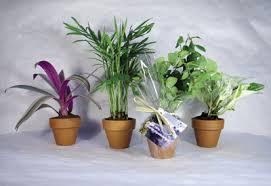 plante de bureau 8 plantes dépolluantes pour le bureau plantes dépolluantes info