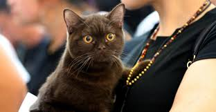 service cats federal agents threaten pet owners with a war on cats