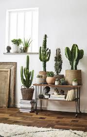 decorationplants decorations conditions beautify