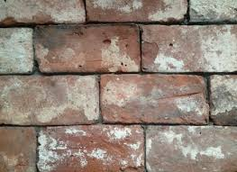 reclaimed thin brick veneer and floor tile zyouhoukan