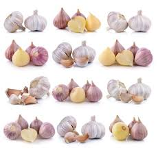 how to start a profitable garlic business for 1 000