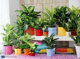 plantes pour bureau plante pour bureau unique le ffenbachia idées de décoration