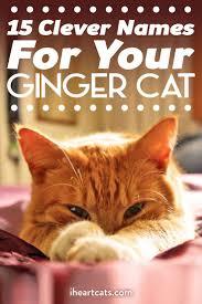 orange cat names best 25 unique cat names ideas on cat names boy cat
