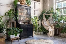 jungle die tropen bei dir zuhause 7roomz