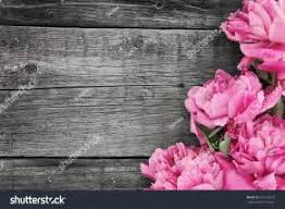 Pink Peony Flower On Dark Rustic Wooden Background With