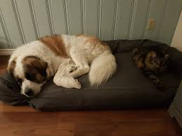 Mammoth Dog Beds by Kate Marlow Kateamarlow Twitter
