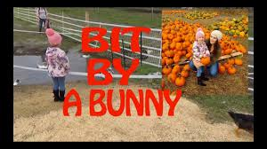 Pumpkin Patch Rides by Pumpkin Patch Pony Rides Petting Zoo Vlog Youtube