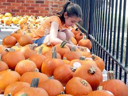Pumpkin Patch Grady Arkansas by Five Local Pumpkin Patches You Can Visit News Houma Today