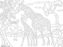 Source Masivy Hard Animal Pattern Coloring Pages Getcoloringpages Pertaining To