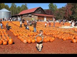Pumpkin Farms In Georgia by Pumpkin Patches To Visit In Georgia This Fall Youtube