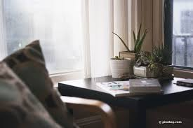 gesunde schlafzimmerpflanzen 18 ideale pflanzen fürs