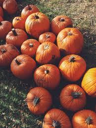 Libbys 100 Pure Pumpkin Nutritional Info by Pumpkin The New Superfood Strong Runner