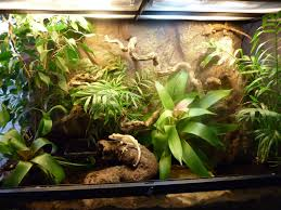 Crested Gecko Halloween Morph For Sale Uk by Show Us Your Set Up U0027s Page 6 Reptile Forums Bearded Dragon