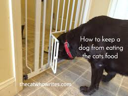 cat wont eat 6 ways to keep a from the cats food i like the last
