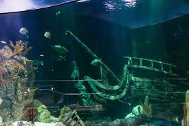 Aquarium Exhibit and Theme Construction at Moody Gardens
