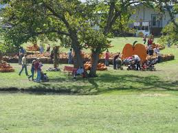 Best Pumpkin Patch Wichita Ks by Best Pumpkin Patches In America U2013 The Vacation Times