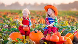 Pumpkin Patch Glendale Co by Best Photographic Pumpkin Patches In Orange County Cbs Los Angeles