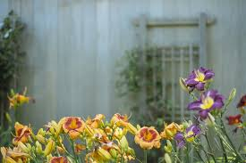 Flowers Barn Garden Yellow Purple Wood Rustic