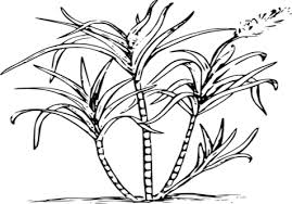 Clip Art Black And White Download Reed Clipart Sugarcane Crop