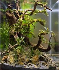 complete guide to aquascaping style pets aquariums