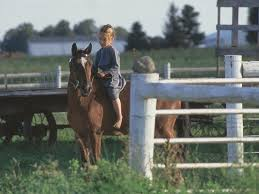Pumpkin Vine Trail Ride by Middlebury Amish Country Visit Indiana
