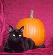 Casola Farms Halloween by Says Me Says Mom October 2015