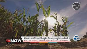 Pumpkin Picking Corn Maze Long Island Ny by Corn Mazes And Pumpkin Patches Near Detroit 2017 Axs