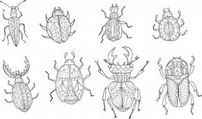 Advanced Insect Coloring Page Kids Activities