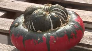 Keep My Pumpkin From Rotting by How You Can Extend The Life Of Your Halloween Pumpkin Wqad Com