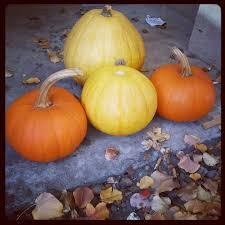 The Great Pumpkin Patch Pueblo Colorado by 22 Best Mccalls Pumpkin Patch Images On Pinterest Pumpkin