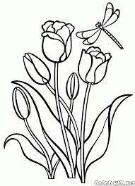 Tulipe Coloriage Génial Luxe Élégant Le Meilleur De Beau Frais