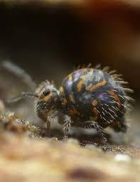 Kill Springtails In Bathroom by Best 25 Springtail Ideas On Pinterest Fungi Mushroom Fungi And