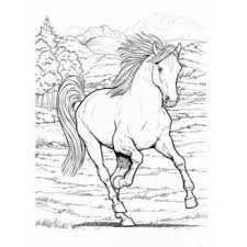 Bold Inspiration Horse Coloring Book Wonderful World Of Horses