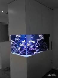 aquarium dans le mur aquarium encastré forum aquarium
