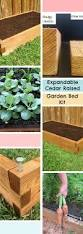 Velvet Tufted Beds Trend Watch Hayneedle by Best 25 4ft Beds Ideas On Pinterest Raised Garden Beds Raised