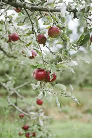 Apple Orchard Pumpkin Patch Sioux Falls Sd by 17 Best Images About Apples On Pinterest Watercolors Sioux And