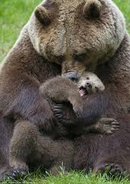 Bear Cub Clipart Mother 13