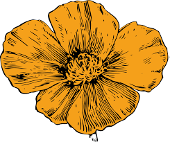 California Poppy Drawing Plants