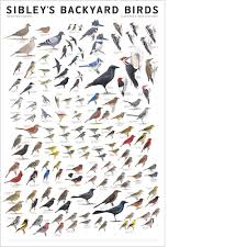 Sibley's Backyard Birds Of Eastern North America Poster – Scott & Nix Americas Most Desperate Landscape Diy Photos Gallery Hibiscus Coffee And Guesthouse Santa Rosa Beach Condo Hotel Stayamerica San Mateo Sfo Ca Bookingcom Backyard Vegetable Garden Venice Los Angeles County Northwest Park Backyard Birds Macs Field Guide Waggoner Photo With Pergola Pergola Valuable America South Floridas Largest 21 And Up Outdoor Party Sibleys Of Eastern North Poster Scott Nix