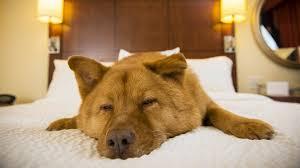 Do Redbone Coonhounds Shed by 30 Least Expensive Dog Breeds Gobankingrates