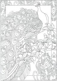 Coloring Pages Peacock Page Free Feathers For Preschoolers