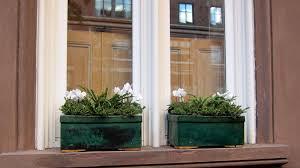 Good Plants For Bathrooms Nz by Gardening 101 Button Fern Gardenista