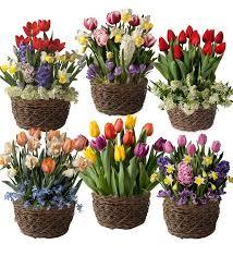 six months of flower bulb gift gardens plow hearth