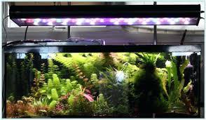 plant aquarium light myacne info