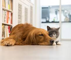 cat in house houzz pets survey who the house dogs or cats