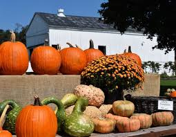 Pumpkin Picking Near Lancaster Pa by Pumpkin Growers Report Mixed Bag This Year Produce Market