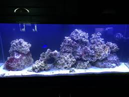 Any Aquascape Ideas For My New 55g?? | REEF2REEF Saltwater And ... Home Accsories Astonishing Aquascape Designs With Aquarium Minimalist Aquascaping Archive Page 4 Reef Central Online Aquatic Eden Blog Any Aquascape Ideas For My New 55g 2reef Saltwater And A Moss Experiment Design Timelapse Youtube Gallery Tropical Fish And Appartment Marine Ideas Luxury 31 Upgraded 10g To A 20g Last Night Aquariums Best 25 On Pinterest Cuisine Top About Gallon Tank On Goldfish 160 Best Fish Tank Images Tanks Fishing
