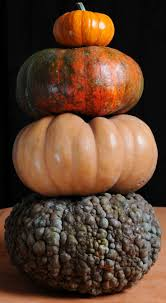 Cinderella Pumpkin Seeds Australia by Best 25 Pumpkin Varieties Ideas On Pinterest Pumpkin Growing